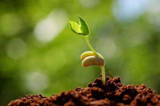 Sprouting Seeds of the Kingdom