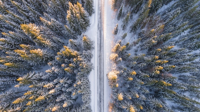 Image of A Forest Road from Above